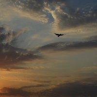 Пролетая над Череповцом... :: dgozia.sergey Нескажу