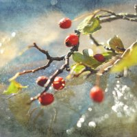 первые морозы :: Viktoriya Bilan