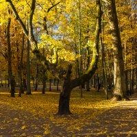 В золоте осенних красок :: Игорь Вишняков