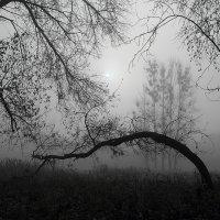 Туманные перспективы :: Олег Бурлака