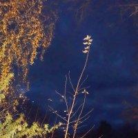 Осенние вечера в Молочном :: Валерий Талашов