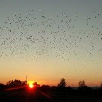 Грачи улетают на закате. :: nadyasilyuk Вознюк