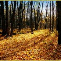 Осенний свет :: Андрей Заломленков
