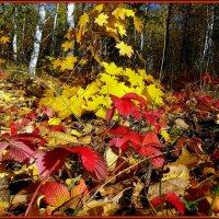 Разноцветье осени :: Андрей Заломленков