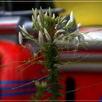 Околокарусельное растение :: muh5257