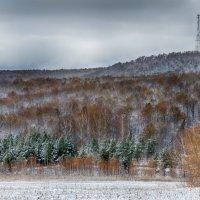 После выпавшего снега, лес удивительно красив! :: Константин Филякин