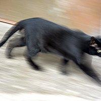Кошак :: Асылбек Айманов