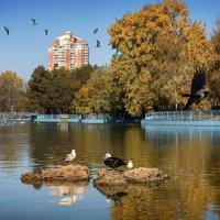 Осень. :: ALLA Melnik