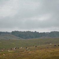 Сентябрьское поле :: Владимир Безгрешнов