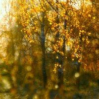 Ах, осень, эта рыжая девица... :: Марина Юдинских