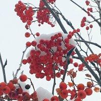 После снегопада :: Наталья Тимофеева