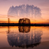 Призрачное дерево :: Dmitriy Stoyanov