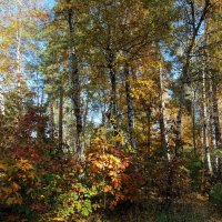 Теплая осень :: Владимир Бровко