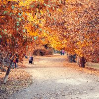 Осенний парк :: igor Seaside