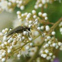 Из жизни жука :: Наталия Григорьева