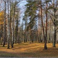Осень в лесопарке. :: Роланд Дубровский