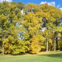 Осенний парк. :: Валерия Комова