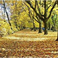 Листопад в парке. :: Валерия Комова