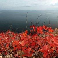 Осень в Двуякорной бухте :: viton