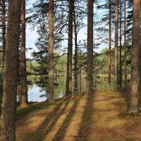 У лесного озера, Карелия. :: Андрей Скорняков