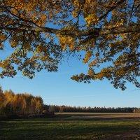 Золотая осень :: Сергей ***