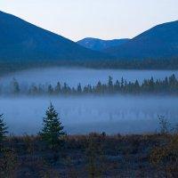 Синий туман похож на обман :: Владимир Собардахов