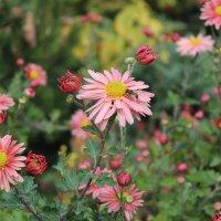 Цветы :: Ann Ny