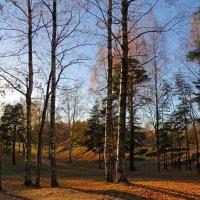 Почти лес :: Вера Щукина