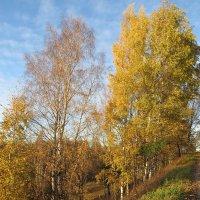 Золотая осень :: Вера Щукина