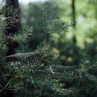 Связь с природой :: Юлия Воронова