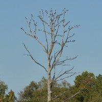 Птичье дерево :: Светлана Рос
