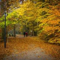 Осень :: tobol-b