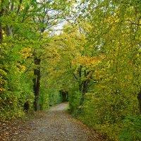 «***Эта осень опьяняет своей красотой.....***» :: Galina Dzubina