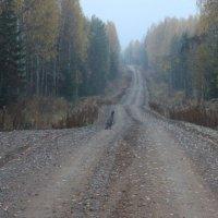 Встреча на лесной дороге. :: Андрей Скорняков