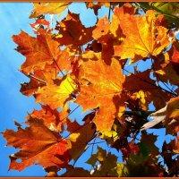 Горенье кленовых листьев :: Андрей Заломленков