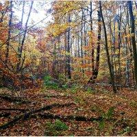 В лесу. :: Валерия Комова