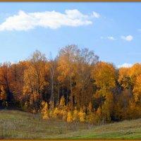 Осенние опушки :: Андрей Заломленков