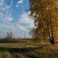 золотая осень :: Виктория Владимировна