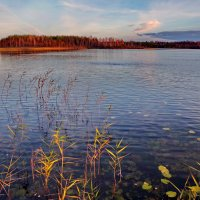 Даниковское озеро *** :: Валерий Талашов