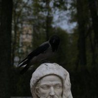 Ворона :: Валерий Томилов