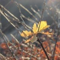 Осень — это вторая весна, когда каждый лист — цветок(А.Камю) :: Rimma Telnova