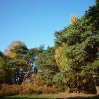 красавица осень :: Oxi --
