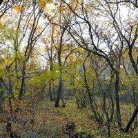 Осенний лес :: Александр