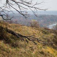 На холмах у Десны :: Тамара Цилиакус