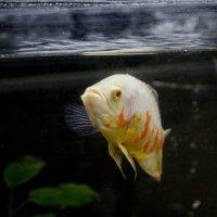 Рыбка :: Dmitriy Predybailo