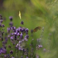 Полёт бабочек :: Марат Макс
