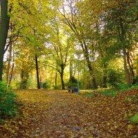 Кудесница-осень в разгар маскарада вальсирует в парках в шикарных нарядах... :: Galina Dzubina