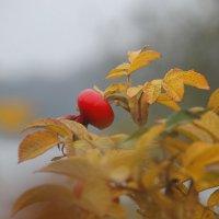 Последний  яркий всплеск осенний.. :: Tatiana Markova