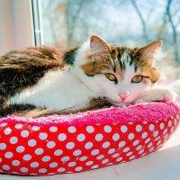 Иногда мой кот смотрит на меня, как будто говоря: «Вот я — кот. А чего добился ты?» :: Наталья Александрова