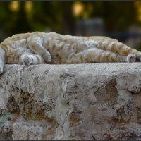 Тихий час-из серии Кошки очарование мое! :: Shmual Hava Retro